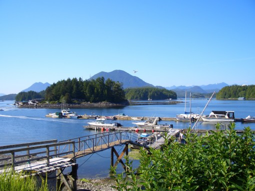 view from our patio in Tofino