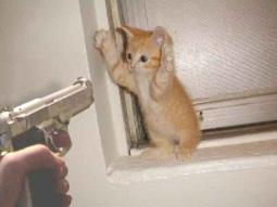 http://julesfredrick.files.wordpress.com/2009/10/cat-robbery.jpg