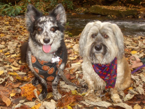 Roxie and Kismet hiking